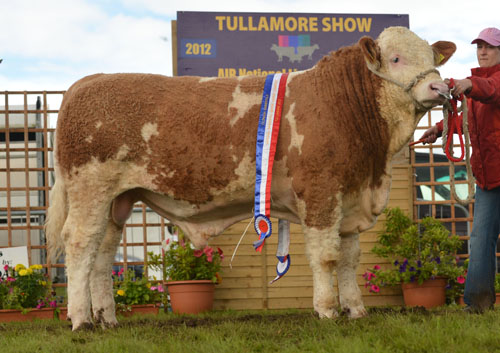 National Yearling Bull Champion - Jennalyn Charie Rose