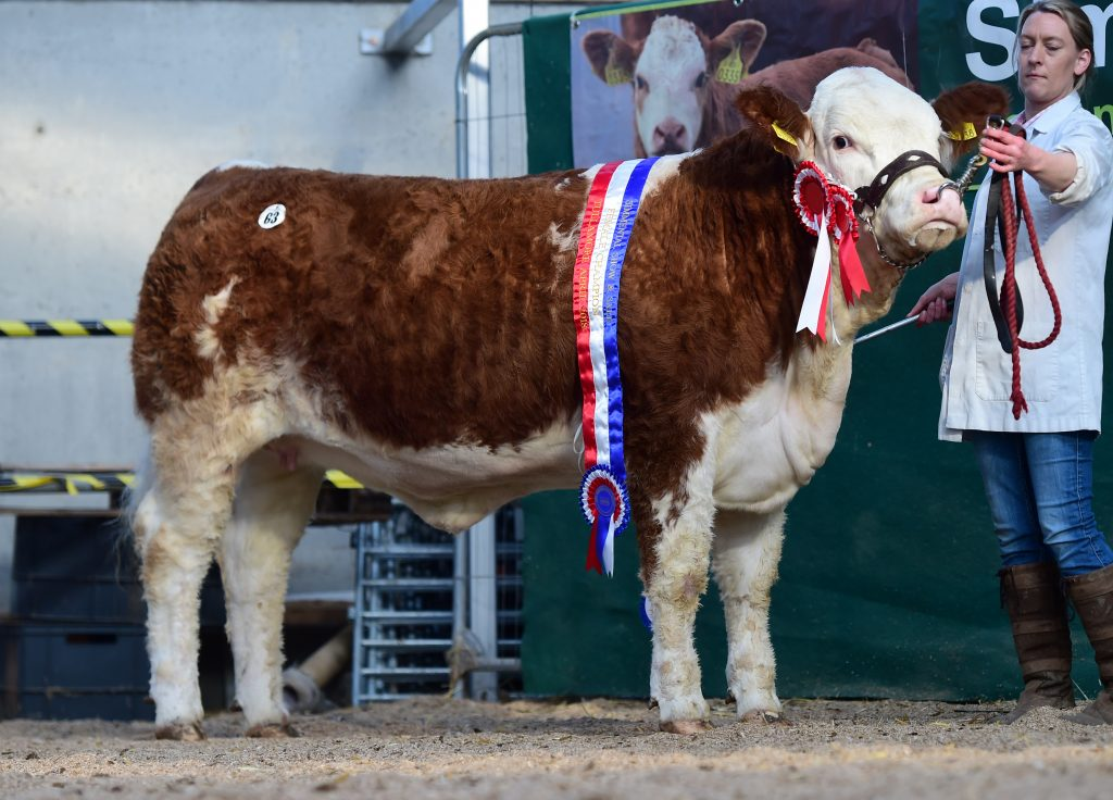 Female Champion Clonagh jazzy Eyes ET €3500