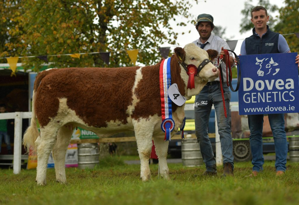 Senior Heifer Calf Champion Clonagh Kiana Miss Joan